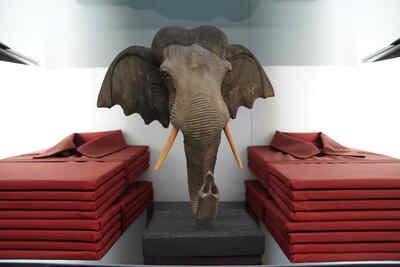 Home   Elefantenkopf 1