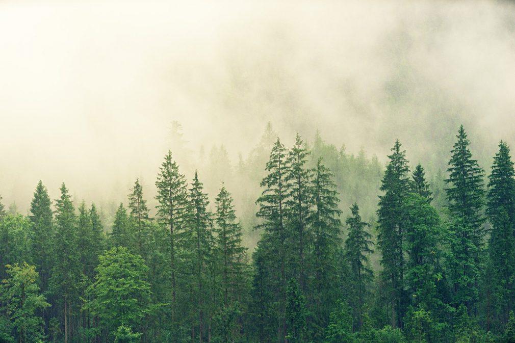 Holz ist heimelig   Fichtenwald