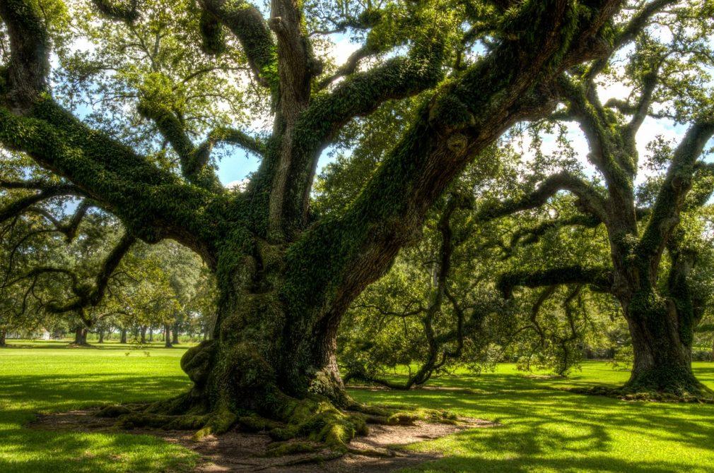 oak alley plantation, usa, america